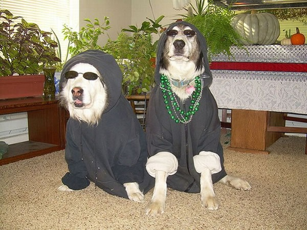 Gangster Dogs