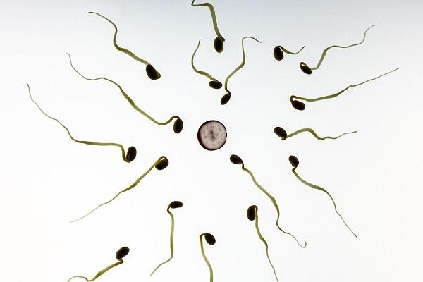 Donating Sperm