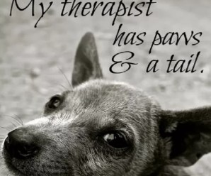 Ten Ways Pets Can Improve Your Mental Health Issues