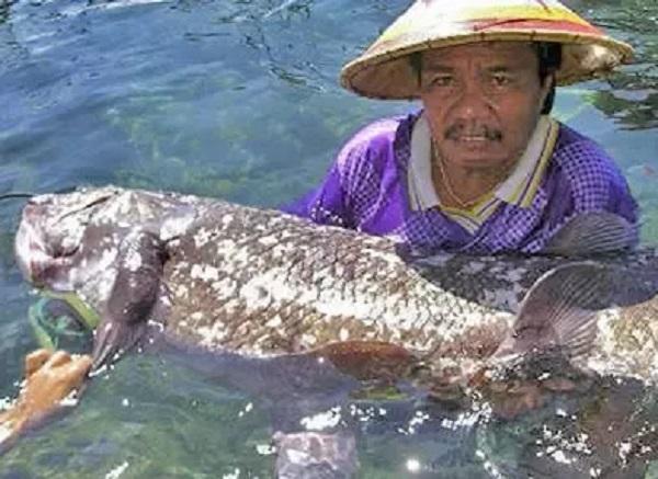 Coelacanth (Oelacanthiformes)