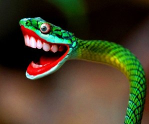 Ten of the Worlds Rarest Species of Snakes and Where to Find Them