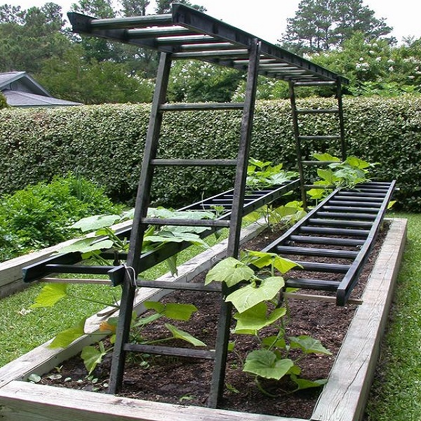 Metal Ladders Turned into Garden Trellis