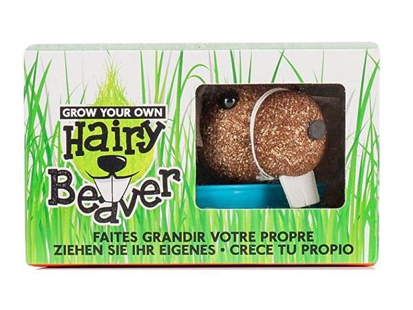 Grow Your Own Hairy Beaver Gift Idea