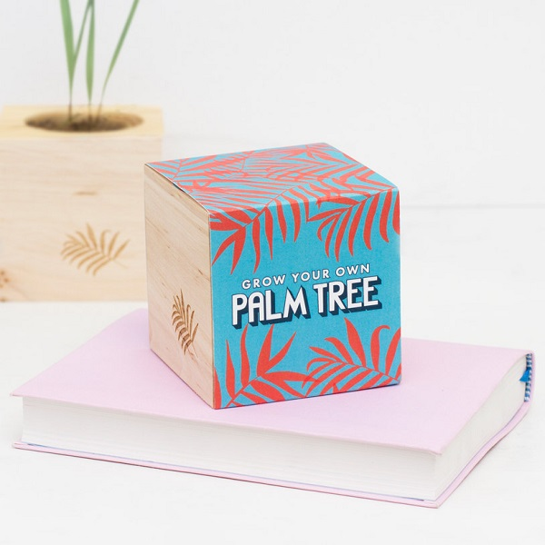 Grow Your Own Palm Tree Gift Idea
