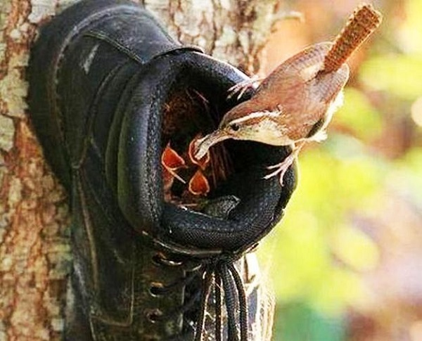 Bird House Made With Old Shoes and Trainers