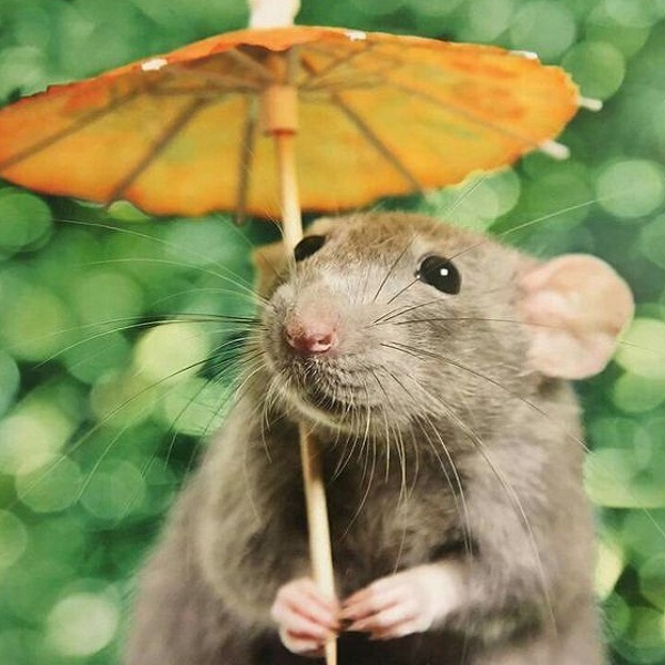 Artefacts That Were Destroyed By Stupid Mistakes - The Parachuting Rat