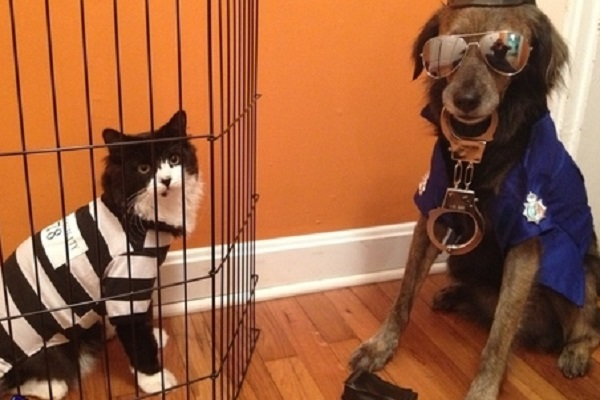Crimes Committed by Animals - The Cat Burglar
