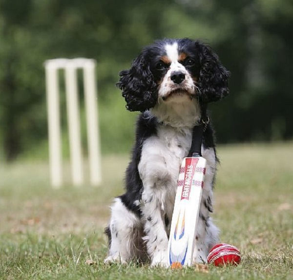 Dogs love cricket as well!