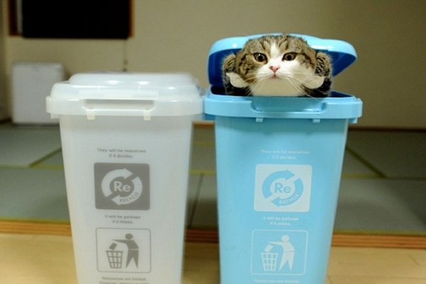 Cat In Bin