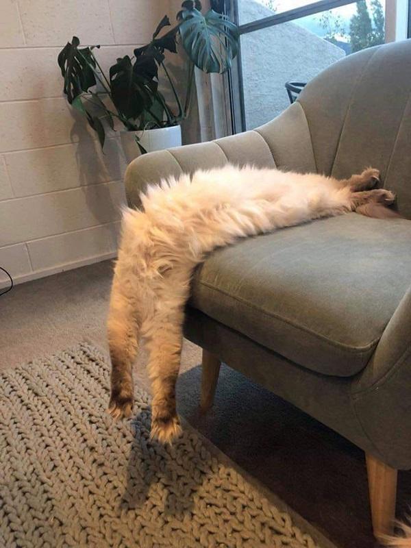 The Burglar That Fell Asleep