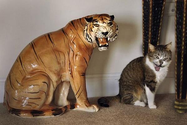 The Thief That Ran Into A Tiger's Den