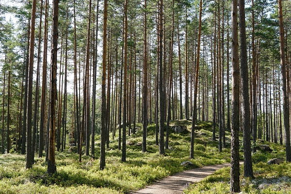 Weird Facts About Trees