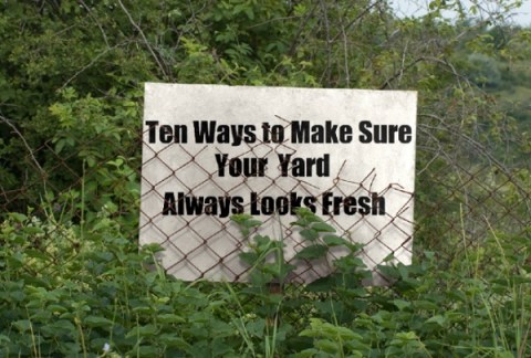 Ten Ways to Make Sure Your Yard Always Looks Fresh