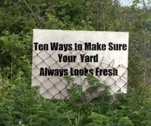 Ten Ways to Make Sure Your Yard Always Looks Fresh