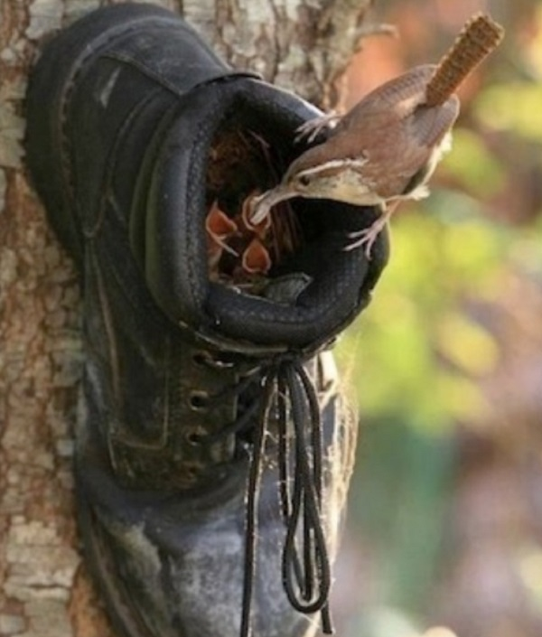 An Old Boot to Make a Birdhouse