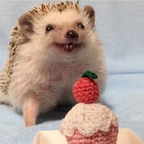 Funny hedgehog meme