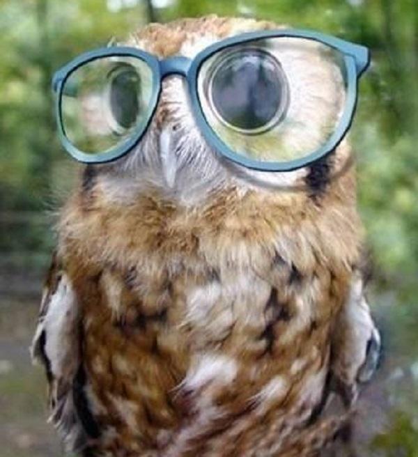 Ten Tips for Encouraging Owls Into Your Garden