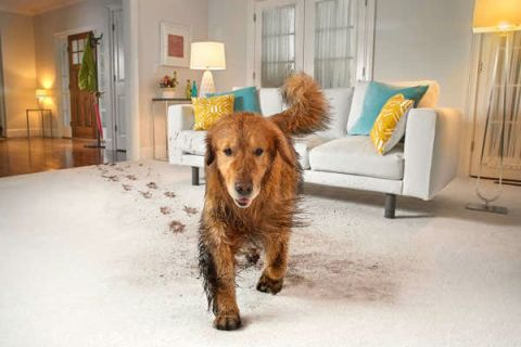 Top 10 Things to Consider When Buying Upholstery Cleaner for Pet Owners