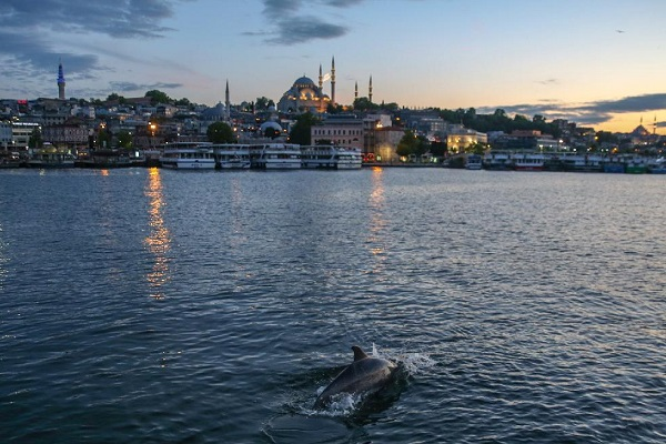 Dolphins Repopulating Turkish Ports