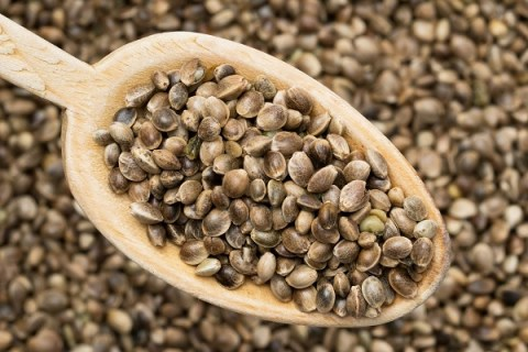 The Ten Main Trace Elements of Cannabis Seeds
