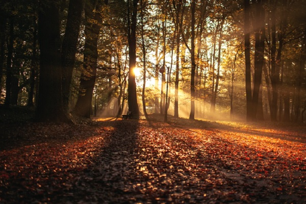 Autumn Sadness: 10 Ways to Improve Mental Health This Fall