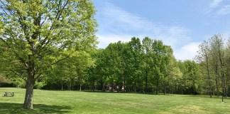 Dobbs Park Restored Prairie