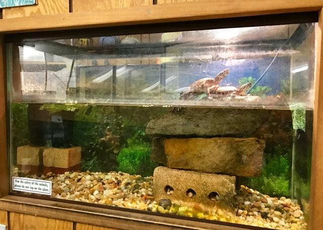 Nature Center Turtles
