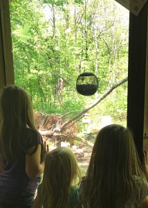 Nature Center Viewing Window