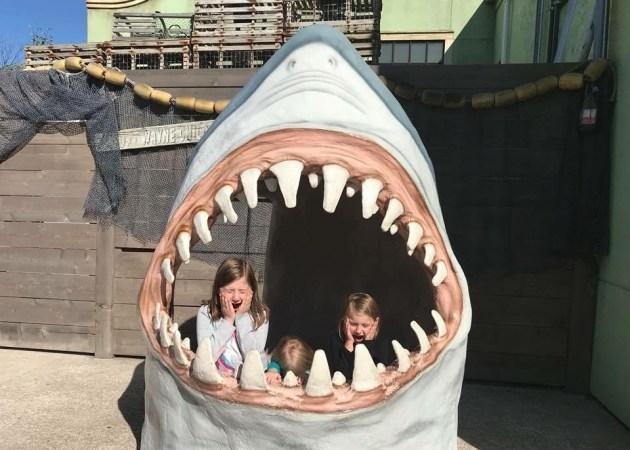 Ft Wayne Zoo Shark