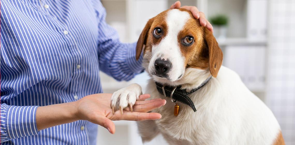 caring dog owner