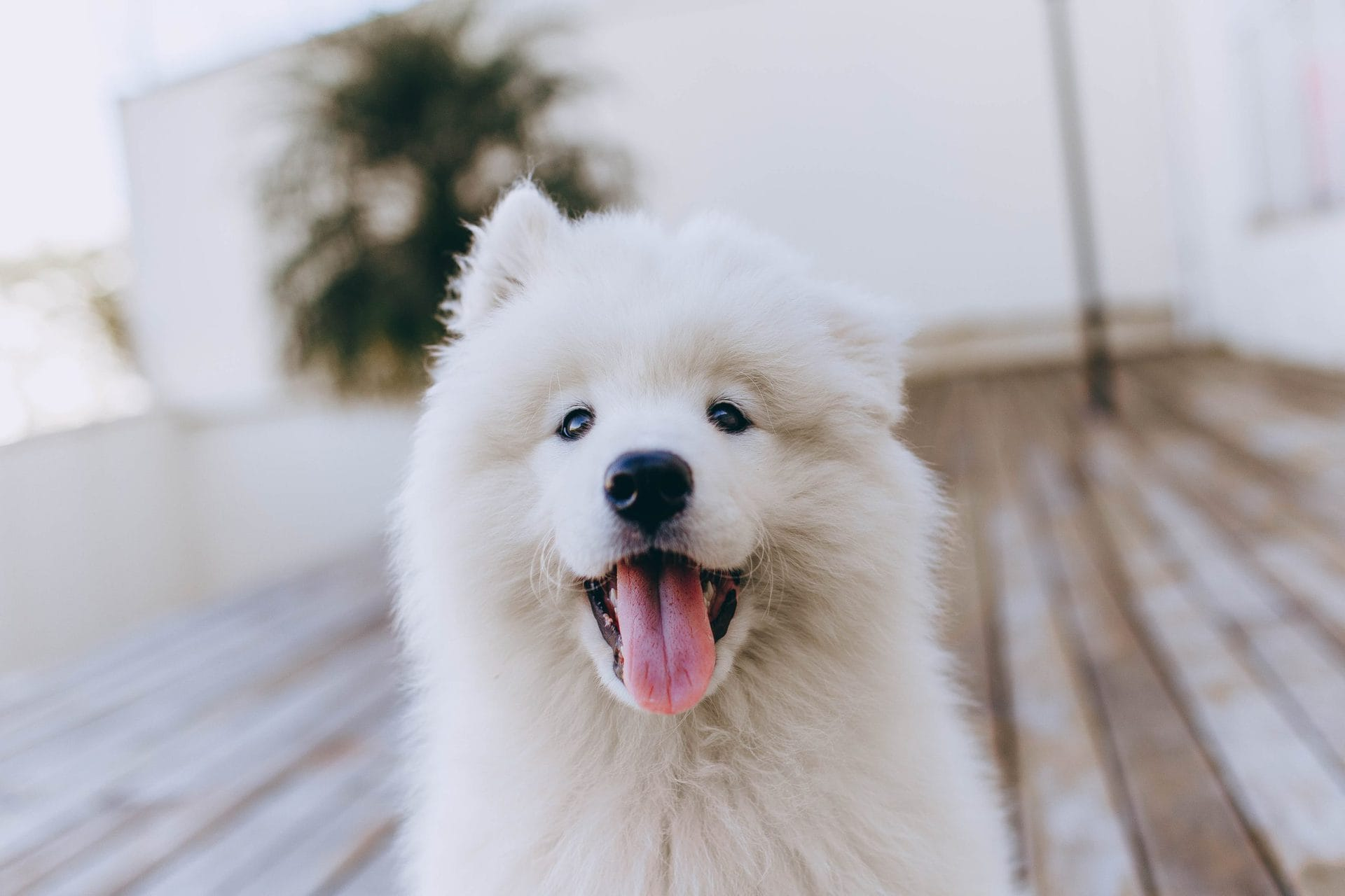 Pale Gums in Dogs: What It Means, Causes & Solutions