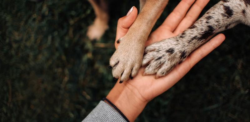Dewclaws in Dogs: All You Need to Know