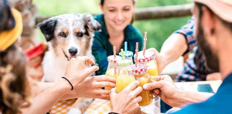 9 Dog Friendly Brunch Spots in Dallas