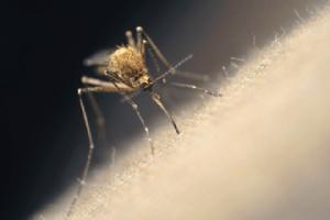 MosquitoHC1404_S_72_C_R
