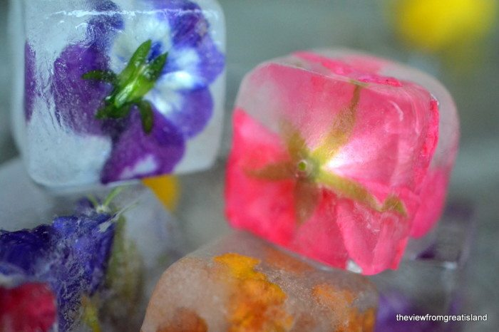 Close up photo of Edible Flower Ice Cubes.