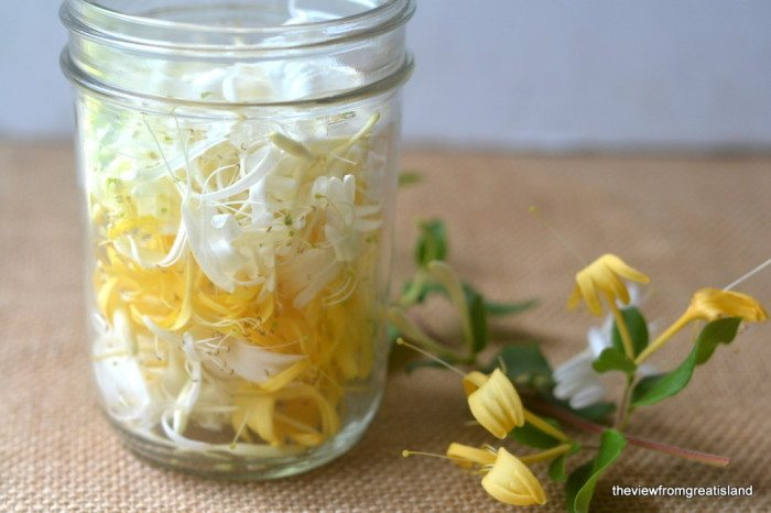 Photo of honeysuckle blossoms next to a jar of honeysuckle flowers for Honeysuckle Iced Tea.