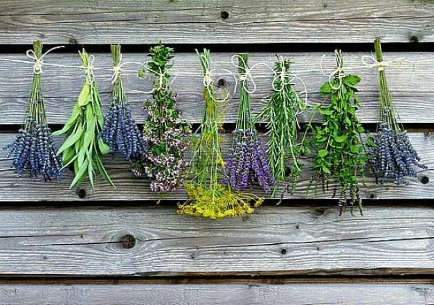 American Artisans Smartseeds: fresh herbs drying
