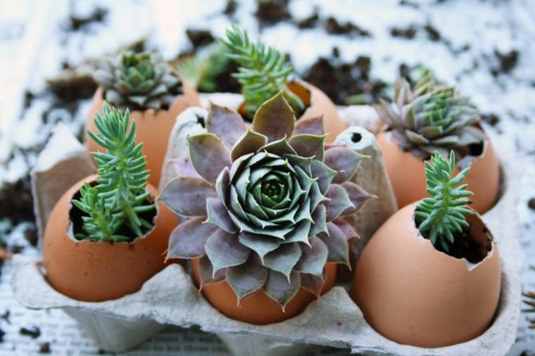 eggshell succulent planters in an egg crate