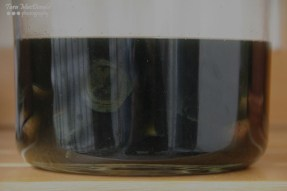 Homemade Walnut Liqueur (Nocino) - Day 4