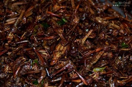 Fried Crickets - Street Food - Bangkok, Thailand