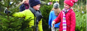 Rushmere Country Park - Pick your own Christmas Tree