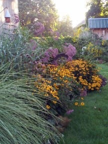 """Ornamental grasses 'Morning Light' and 'Dallas Blues' all grown up and set off by Black-eyed Susans and Joe-Pye, steal the show in the Fall of 2012. This garden bed is a small """"corridor"""" offering safe passage and a connection to the back garden. Far more enticing to wildlife than bare, open lawn."""