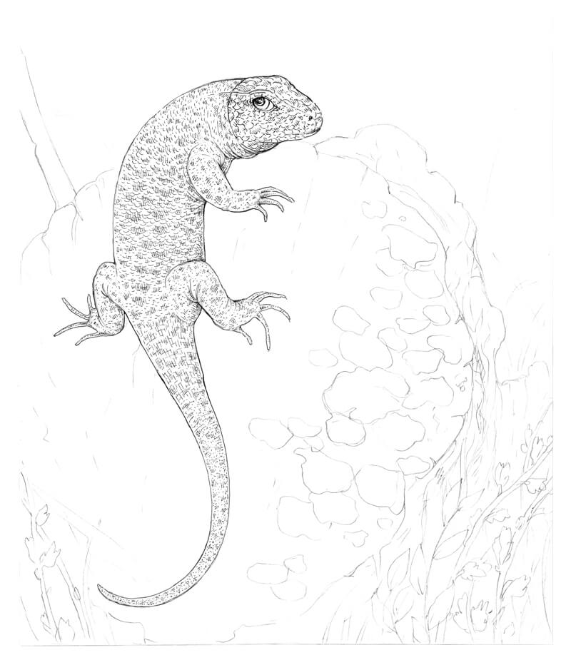 How to Draw a Lizard with Pen and Ink
