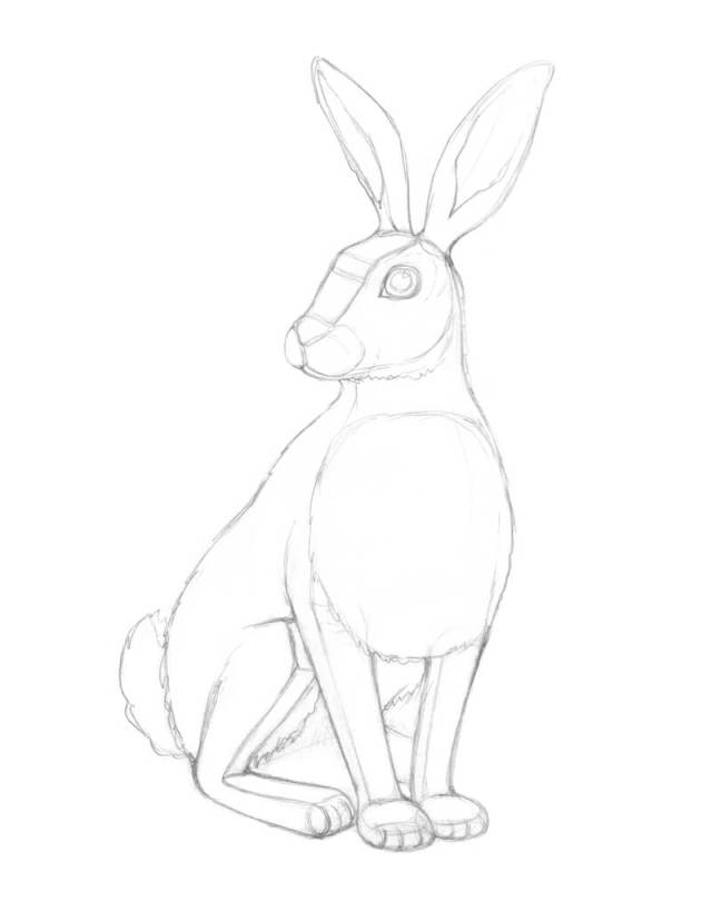 Adding details to the pencil drawing of a rabbit