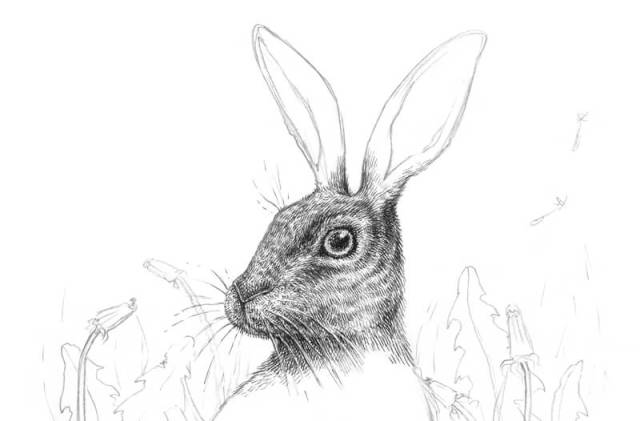 Drawing the texture of fur on the rabbit's muzzle