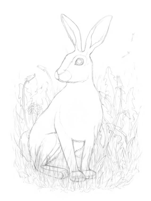 Drawing the elements in the foreground in front of the rabbit