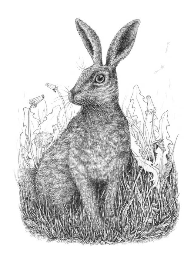 Completing the fur of the rabbit with ink pens