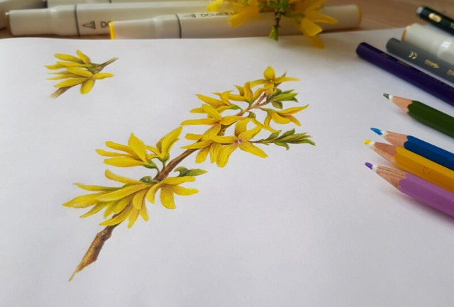 Mixed media drawing of flowers