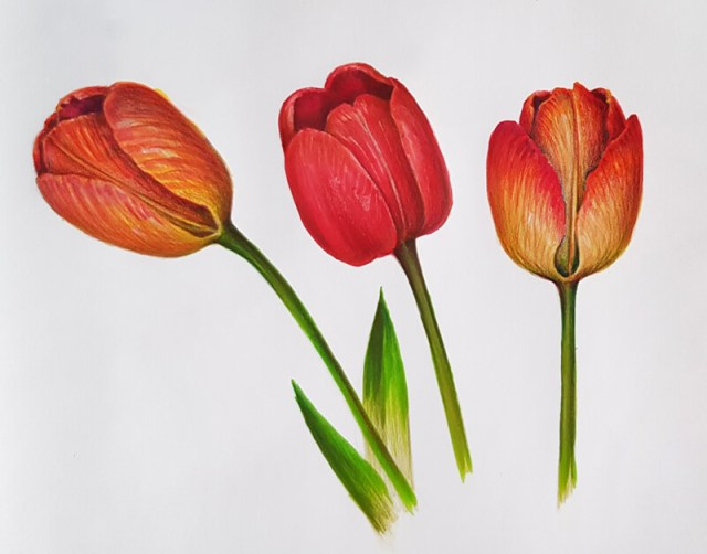 Drawing of flowers with colored pencils and markers
