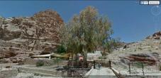 Tree - Petra, Jordan